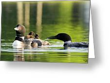 Loon Mom Serves Breakfast In Bed Greeting Card