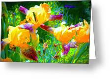 Breakfast Time Oj Irises Greeting Card