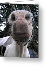 Breath Of A Kind Pony Greeting Card