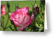 Breathtaking Beauty Greeting Card