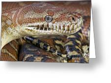 Bredl's Python Greeting Card