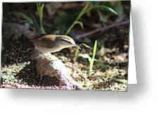 Breswick Wren On Tree Root 2 Greeting Card