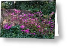 Brick Wall And Azalea Greeting Card