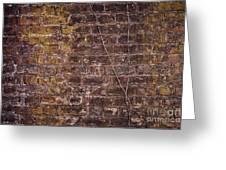 Vine Up A Brick Wall  Greeting Card