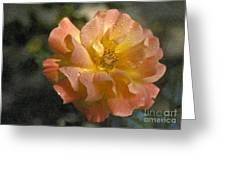 Bridal Pink Yellow Hybrid Tea Rose Genus Rosa Greeting Card