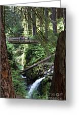 Bridge At Sol Duc Fall #1 Greeting Card