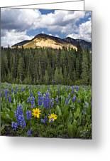 Bridger Teton National Forest Greeting Card