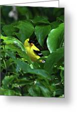 Bright American Goldfinch Greeting Card