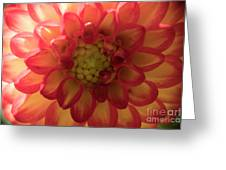 Red And Yellow Flower Bloom Greeting Card
