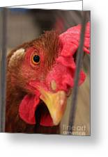 Bright And Colorful Chicken Who Are You Greeting Card