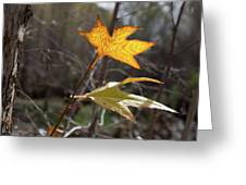 Bright And Sunlit Leaf, Arizona Greeting Card