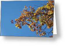 Bright Autumn Branch Greeting Card