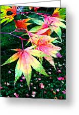 Bright Autumn Leaves Tatton Park Greeting Card