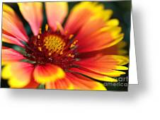 Bright Blanket Flower Greeting Card