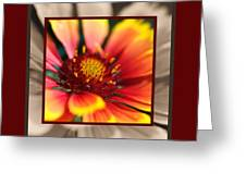 Bright Blanket Flower With Design Greeting Card