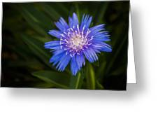 Bright Blue Aster Greeting Card