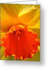 Bright, Bold Daffodil Greeting Card