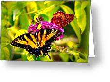 Bright Butterflies Greeting Card