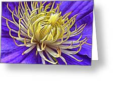 Bright Clematis Center Greeting Card