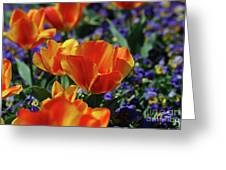 Bright Colored Garden With Striped Tulips In Bloom Greeting Card