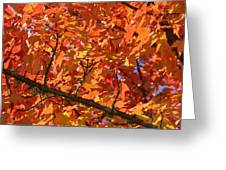 Bright Colorful Autumn Tree Leaves Art Prints Baslee Troutman Greeting Card