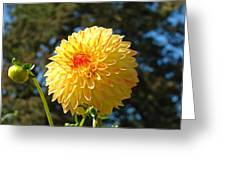 Bright Colorful Dahlia Flower Art Prints Baslee Troutman Greeting Card
