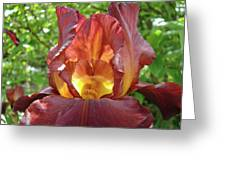 Bright Colorful Iris Flower Irises Baslee Troutman Greeting Card