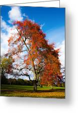 Bright Fall Colors Greeting Card