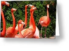 Bright Flamingos Greeting Card