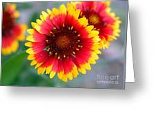 Bright Floral Day Greeting Card