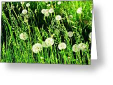 Bright Grass 2 Pd2 Greeting Card