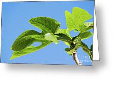 Bright Green Fig Leaf Against The Sky Greeting Card
