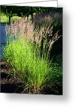 Bright Green Grass By The Pond Greeting Card