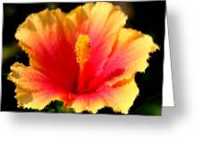 Bright Hibiscus Greeting Card