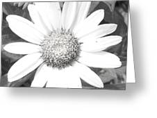 Bright In White Greeting Card
