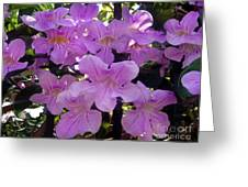 Bright-lillac Flowers 6-22-a Greeting Card