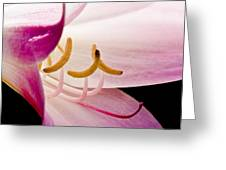 Bright Lily Greeting Card