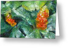 Bright Orange Blooms On A Plant Greeting Card