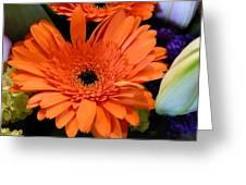 Bright Orange Daisy Greeting Card