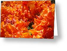 Bright Orange Rhodies Art Prints Canvas Rhododendons Baslee Troutman Greeting Card