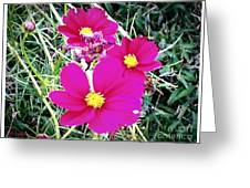 Bright Pink Flowers Greeting Card