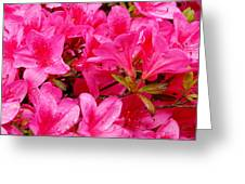 Bright Pink Rhododendrons Greeting Card