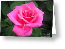Bright-pink Rose 049 Greeting Card