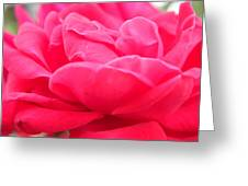 Bright Pink Greeting Card
