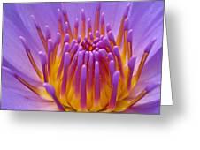 Bright Purple Lotus Greeting Card