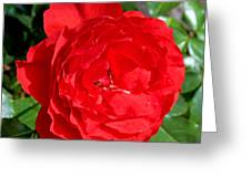 Bright Red Rose At Pilgrim Place In Claremont-california  Greeting Card