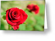 Bright Red Rose Greeting Card