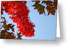 Bright Red Sunlit Autumn Leaves Fall Trees Greeting Card