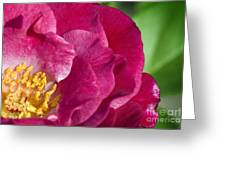 Bright Rose Bloom Greeting Card