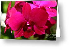 Bright Scarlet Red Orchid Greeting Card
